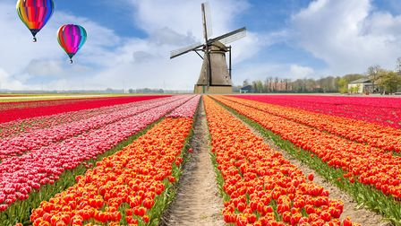 Holland is world-renowned for its tulip fields