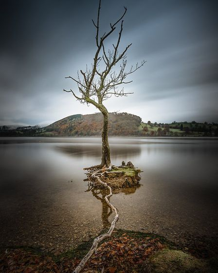 Lone Tree by Peter Stevens, Harpenden Photographic Society.