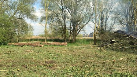 Some of the trees harvested for the cricket bats