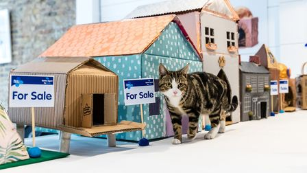 Cat-titude: Evie examines the houses on offer from the Blue Cross Estate Agent for Cats in Old Stree