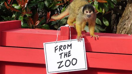 Dear Zoo comes to Whipsnade.