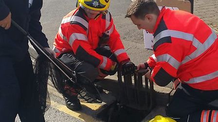 Six ducklings rescued from a storm drain after becoming trapped. Picture: Cambridgeshire Fire and Re