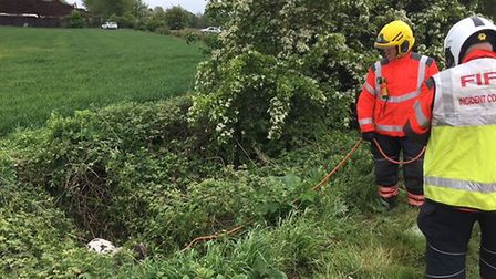The pony had fallen into a ditch in Ramsey.
