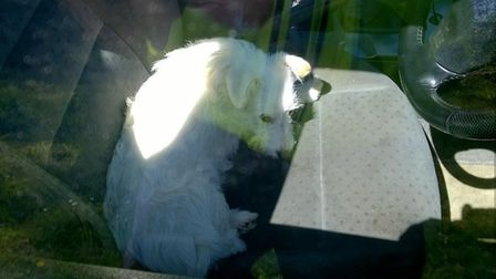 Police rescued this dog, who had been abandoned in a locked car in Welwyn Hatfield Picture credit: