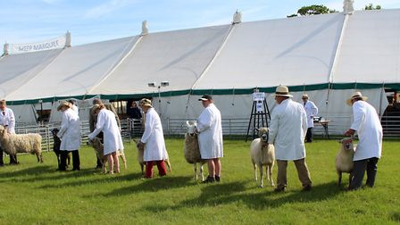 The Herts County Show.