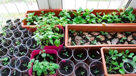 St Albans Gardeners Forum meets on Tuesday.