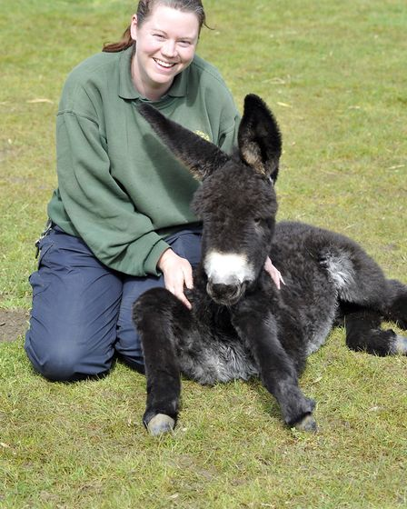 Keeper Rosa King, with foal Evie,