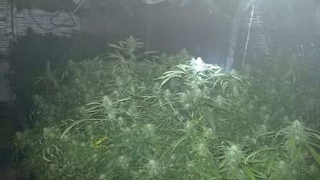 Police uncover cannabis farm in Offord Darcy house