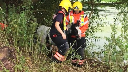 A foal was rescued from the River Great Ouse at Offord Cluny.