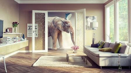 The elephant in the room: animal themes are widespread in interior design
