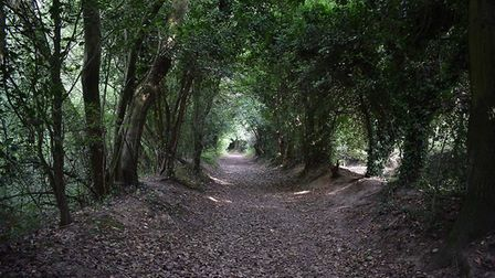 Behind How Wood Station on Hyde Lane, this wooded path leads to the lakes [credit: Amber Kira Photog
