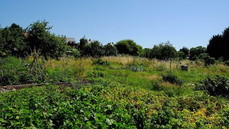 The allotments behind Folly Lane. Picture: DANNY LOO