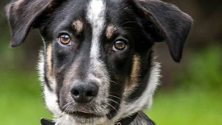 A dog from Glendee Rescue. Picture: CERCO COMMUNICATIONS