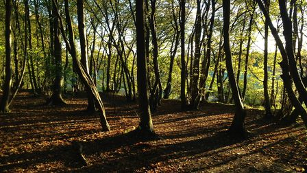Heartwood Forest. Picture: ARCHANT LIBRARY