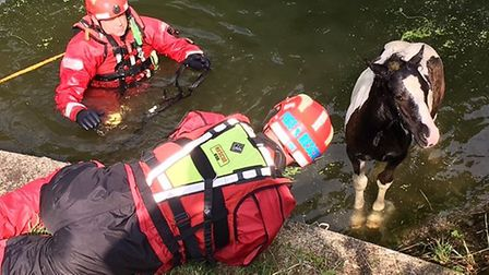 Firefighters rescue foal after it became trapped in river