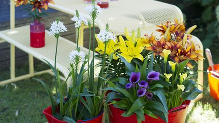 Potted bulbs are an asset to any garden [PA Photo/thejoyofplants.co.uk]