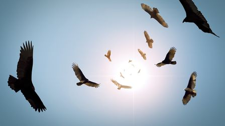 A flock of circling vultures.