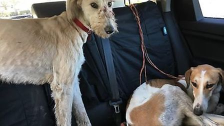 These two dogs were abandoned between Earith and Haddenham when officers from the police's Rural Cri