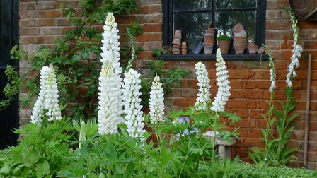 Lupin good: There's a lot you can do to turn a tired garden around [PA Photo/Hannah Stephenson]