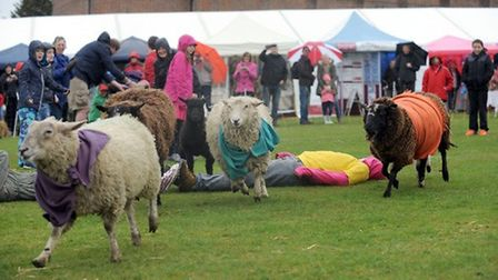 The Herts Town and Country Show takes place in Watford this August