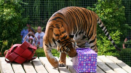Amba inspecting her present at a previous birthday.
