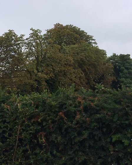 The trees were being cut in Royston to improve signal for EE customers. Picture: Rob Reed