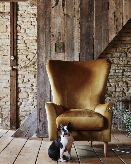 Woodland Walk: Jonanna chair, in matt velvet mustard, from £499, Next [Next/PA Photo/Handout]