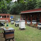 The Huntingdonshire Beekeepers' Association apiary at Hinchingbrooke Country Park