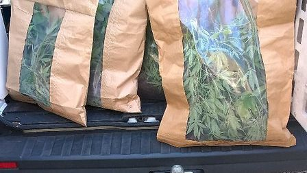 These bags of cannabis plants were found in Bedmond Lane, St Albans. Picture: Harpenden Police @Har