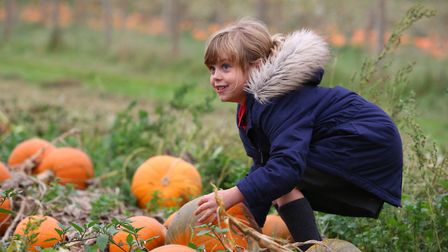 Anwen picks a pumpkin to carve at Willows farm. Picture: Danny Loo