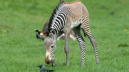 Katie was born at Whipsnade Zoo in early September