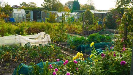 A generic photo of a general view of allotments, growing both vegetables and flowers. See PA Featur