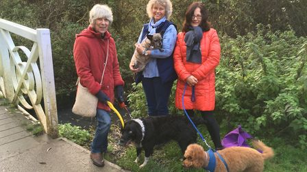 GREEN STREAM: Trish Brown, Anneke Tookman and Pamela Dignam are concerned about pollution in a strea