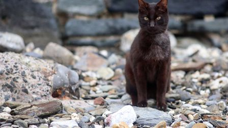 Fudge Jenkins hitchhiked from Cornwall in the back of a van. Picture: Fleur Churchill