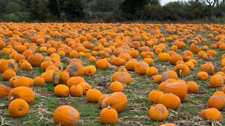 Buying pumpkins direct from the patch is becoming increasingly popular