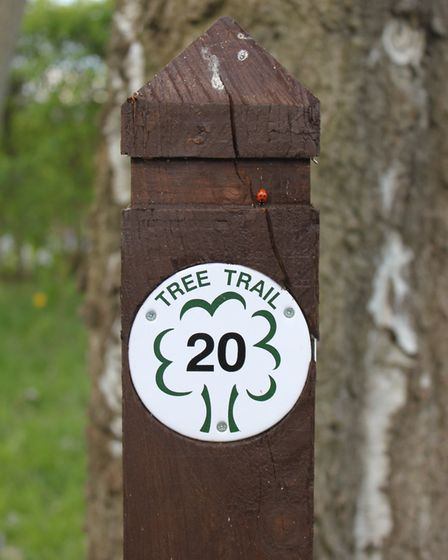 The Tree Trail is one of Highfield Park's attractions