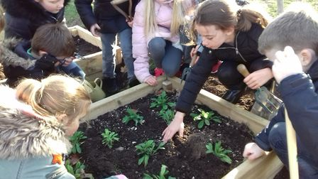 Year 4 children at Tannery Drift planting their poppies. Picture: Tannery Drift