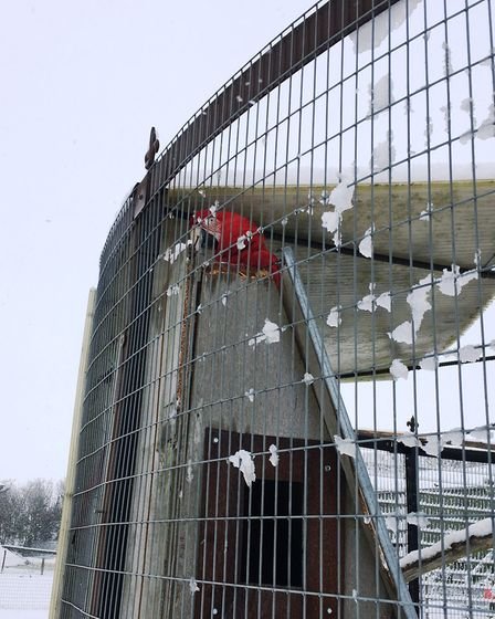 Macaw take shelter amid the snow at Johnsons of Old Hurst. Picture: ARCHANT.