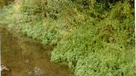 Foliage overgrowing the River Ver along a public footpath. Picture: June Chittenden