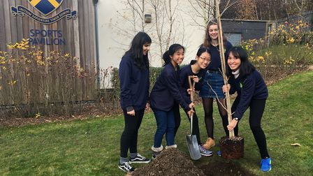 The students planting the tree. Picture: STAHS
