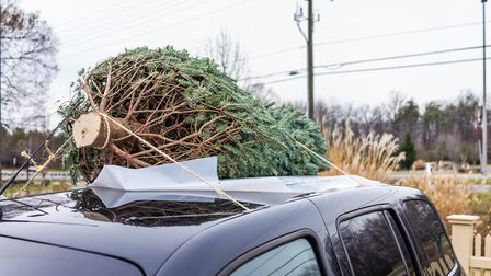 How not to transport a Christmas tree...