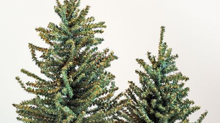Big or small? Size matters when it comes to picking the perfect Christmas tree