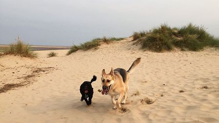 Nick Burr's guide dog Amber, right, playing with other dog Beau. Picture: NIck Burr