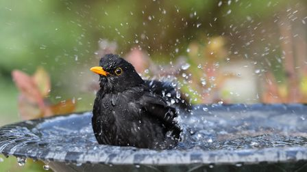 Give your feathered friends a hand this winter by topping up their bird bath