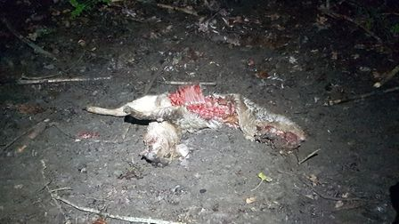 What happened to this deer? Picture: Luke Houghton