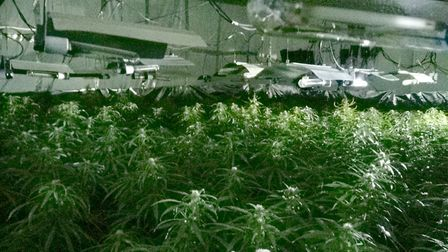 Police discovered a cannabis factory near Swavesey. Picture: CAMBS POLICE