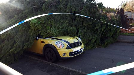 A conifer came down in Bevan Close, Huntingdon, landing on a car. Picture: ARCHANT