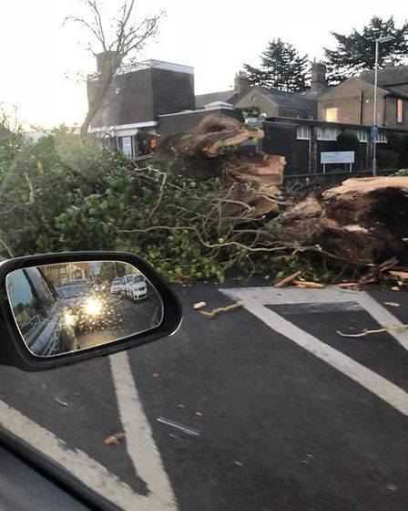One tree blocking the Cromwell Place medical surgery taken by Gemma Louise Twin.