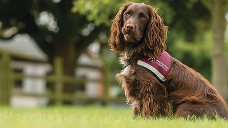 One of the hearing dogs.