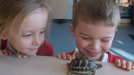 The tiny tortoise has a big problem as it is currently nameless. Picture: BRINGTON SCHOOL